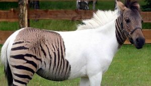 hybrid-animals-you-didnt-know-existed9